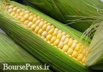 پایان طرح قیمت تضمینی ذرت در بورس کالا و پرداخت ۹۰ درصدی پول کشاورزان