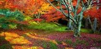 پاییز طلایی