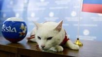 گربه پیشگوی ایران را برنده بازی اعلام کرد