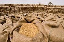 ایران ۴ میلیون تن گندم مازاد برای صادرات دارد