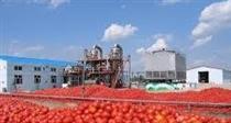 صادرات بشکه های ۲۳۰ کیلویی رب گوجه تا پایان مهر بلامانع شد