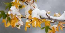 بارش باران ، برف و کاهش  ۵ تا ۱۰ درجه ای دما در ۱۵ استان از امروز تا جمعه